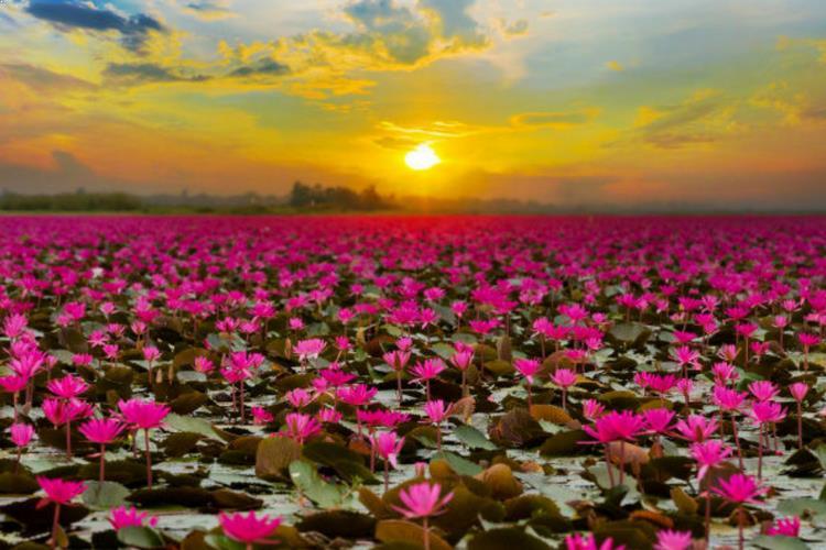Red Lotus Lake in Udon Thani