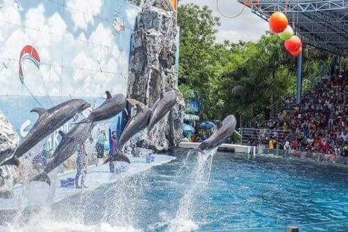 attaya dolphin show safari